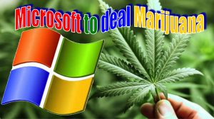 Microsoft to deal marijuana