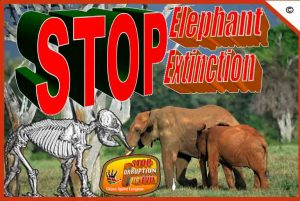 stop-elephant-extintion-stop-corruption