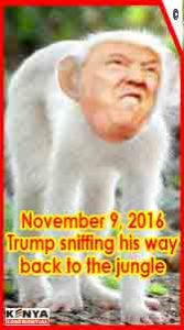 trump-sniffing-his-way-to-the-jungle